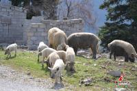 Πρόβατα με...
