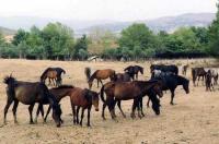 Ο Βουκεφάλας, το περίφημο άλογο του Μεγάλου Αλεξάνδρου