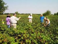 Αποζημίωση των πληγέντων βαμβακοπαραγωγών της Θεσσαλίας από το πράσινο σκουλήκι για 3η συνεχή χρονιά