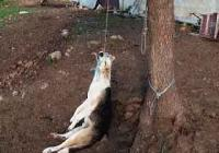 Κρέμασε το σκύλο του για παραδειγματισμό  στη  Βλαχάβα  Καλαμπάκας !