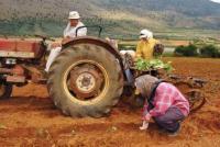 Ερώτηση Ταμήλου σχετικά με τη μείωση του ορίου ηλικίας συνταξιοδότησης αγροτών