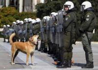 Πέθανε ο ΛΟΥΚΑΝΙΚΟΣ. Ο Σκύλος - θρύλος της Αθήνας