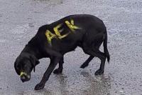 Έβαψε το σκυλί, γράφοντας ΑΕΚ ! Αχαρακτήριστη κίνηση υπανθρώπου...