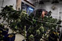 Έσοδα δισ. από τις παράνομες φυτείες χασίς στην Αλβανία