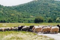 Σημαντικό έργο για κτηνοτρόφους στην Αγρελιά