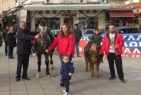 Άλογα του Βουκεφάλα στην κεντρική πλατεία