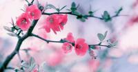 Άνοιξη και Λαμπρή: Άνθη και μέλισσες προμύνημα ελπίδας