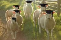Αποφοίτηση κτηνοτρόφων εκπαιδευτικού προγράμματος Αμερικανικής Γεωργικής Σχολής