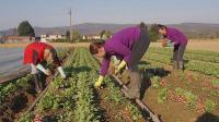 Κραυγή αγωνίας από τους αγρότες - Σιγή ιχθύος από το ΥΠΑΑΤ