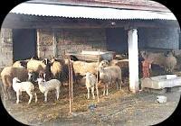 Για την έγκριση ίδρυσης κτηνοτροφικής εγκατάστασης