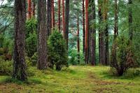 Μια βόλτα στο δάσος τον έκανε εκατομμυριούχο