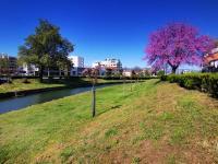 Άνθισαν και φέτος oι κερασιές στο Ληθαίο ποταμό