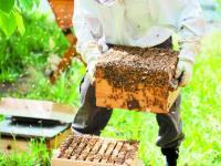 Ενημέρωση των μελισσοκόμων της περιοχής μας