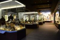 """""""Χρυσό"""" το Μουσείο Φυσικής Ιστορίας Μετεώρων και Μουσείο Μανιταριών"""