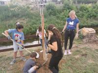 150 δέντρα πρασινίζουν το «νησάκι» του Αγιαμονιώτη