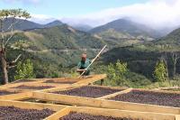 Κουλτούρα καφέ και περιβάλλον
