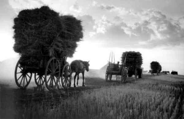 Αποτέλεσμα εικόνας για παλιές φωτογραφίες θερισμού